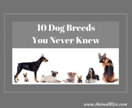 10 Dog Breeds You Never Knew Existed