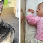Jade the German Shepherd Saves Baby Girl