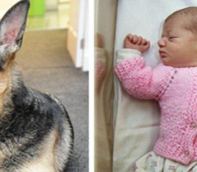 Jade the German Shepherd Saves Baby Girl