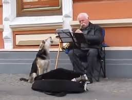 Ukrainian stray dog sings