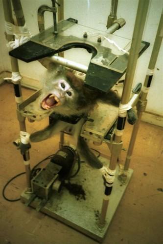 Humane Society Shocking Human Display Protests Against Animal Testing