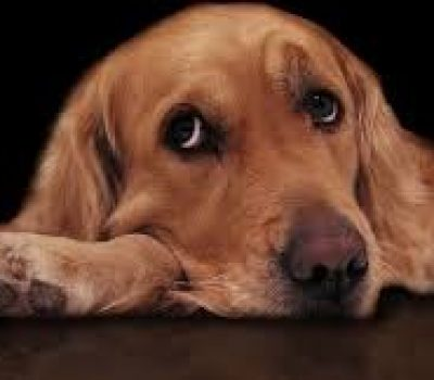 Diary of a Sad Dog Viral Video, Some Canine Thoughts