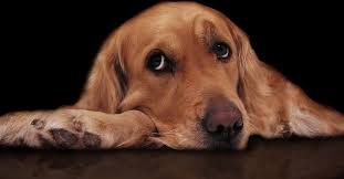 Diary of a Sad Dog Viral Video