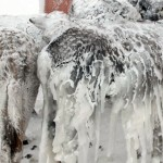 Frozen Donkeys in Turkey?  Worry Not, They Are Thawed Out Now