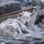 Trash Heap Stray Dog Story Will Melt Your Heart, I Promise! (VIDEO)