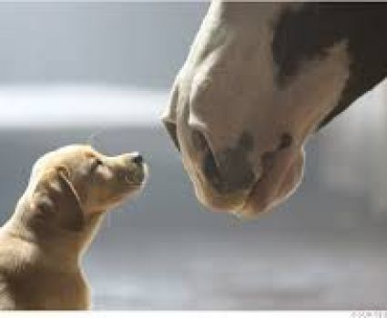 """2014 Budweiser Super Bowl Commercial – """"Puppy Love"""", Another Great One"""