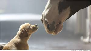 """2014 Budweiser Super Bowl Commercial - """"Puppy Love"""""""