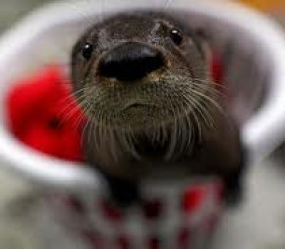 Baby Otter Named Fenway Just Being Cute and Playing with Puppy Friend