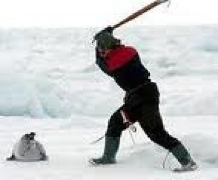 STOP Canadian Seal Slaughter | Animals Killed for Fur Industry | PETA