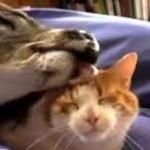 Sweet Love Affair Between Deer and Cat: Unlikely Animal Friendships