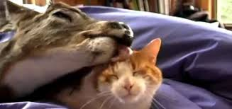 Image of: Interspecies Rascal And Rocco Sweet Love Affair Between Deer And Cat Unlikely Animal Friendships