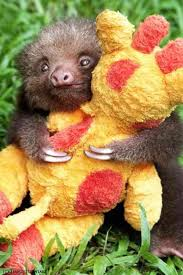 Baby Sloth Orphanage Rescue Cen