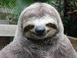 Fun Facts About Sloths that are sure to fill you with fascination for these weird and wonderful animals, the slowest mammals in the world.