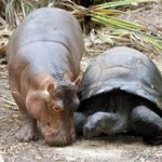 4 Unusual Animal Friendships, Why Can't We All Just Get Along?