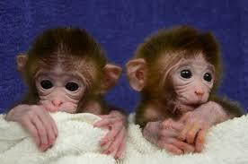 Animal Defenders International