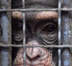 Animal Defenders International 3