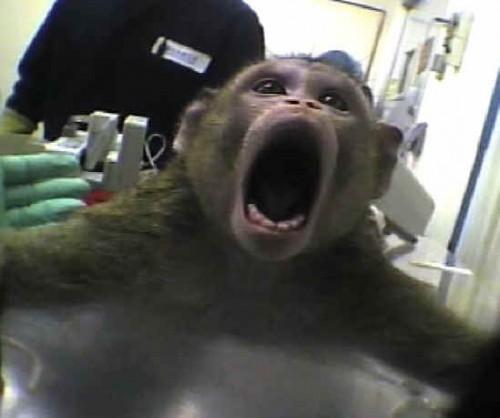 Animal Defenders International Expose Brutal Monkey Farm