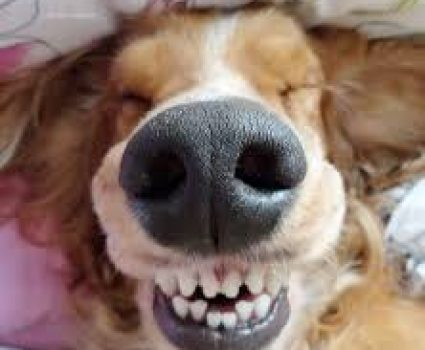 6 Unbelievable Things Dogs Can Smell That Humans Cannot