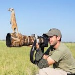Meerkats Using Photographer to Get a Better View, How cute is that?