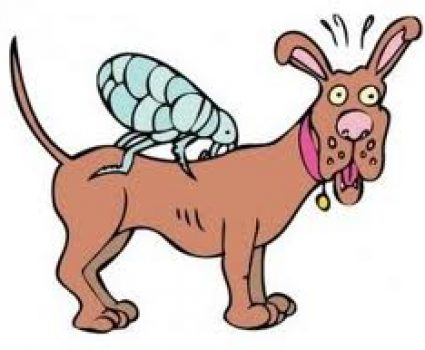 NATURAL Flea and Tick Spray for Dogs and Cats That Really Works