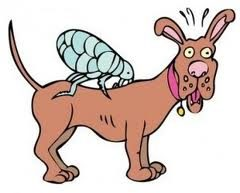 Natural Flea and Tick Control for Dogs and Cats That Really Works