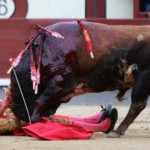 Madrid Bullfight Suspended After 3 Matadors Gored