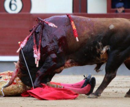 Madrid Bullfight Suspended After 3 Matadors Gored