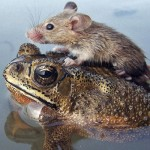 Animal Odd Couples BBC Documentary, Wildlife and Pets