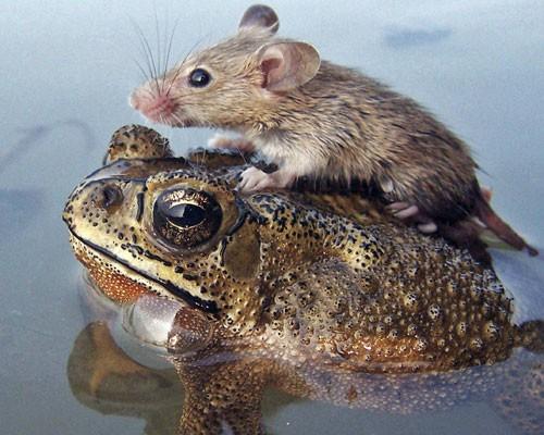 Animal Odd Couples BBC Documentary