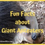 Fun Facts About Giant Anteaters That Make Them Awesome