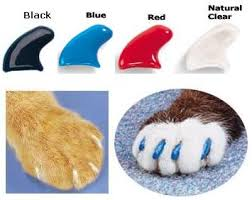 Reasons Why You Should Never Declaw Your Cat