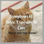 Symptoms of Toxic Exposure in Cats, What are the Signs?