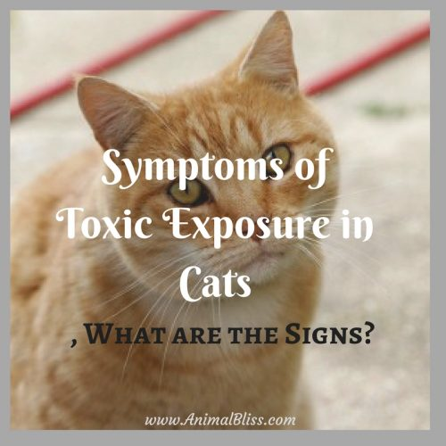 Learning to recognize the signs and symptoms of toxic exposure in cats may mean the difference between life and death of your feline companion.