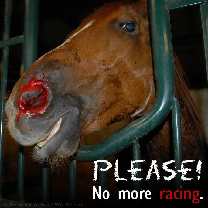 Cruel horse racing in one minute video
