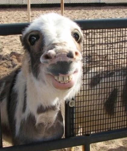 goofy animal pics