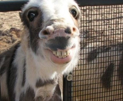 11 Goofy Animal Pics That I Promise Will Make You Smile