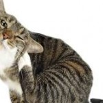 Hidden Conditions Could Make Your Pet Lick Excessively