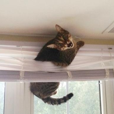 16 Funny Cat Pics