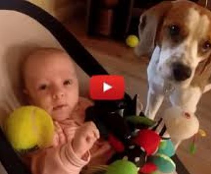 Guilty Dog Steals Toy From Baby, Then Makes Up For It