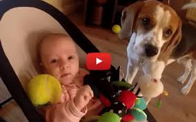 Guilty Dog Steals Toy From Baby
