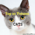 Top 10 Poisons for CATS, Beware of These Feline Toxins