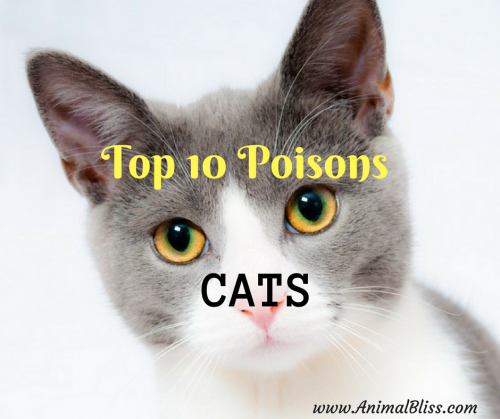 Top 10 Poisons for Cats: Dangerous Toxic for Your Feline