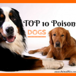 Top 10 Poisons for DOGS, Beware These Dangerous Toxins