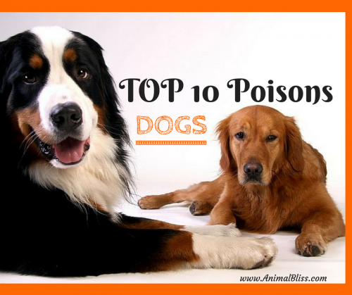 Top 10 Poisons for Dogs - Keep your dog away from these dangerous toxins.