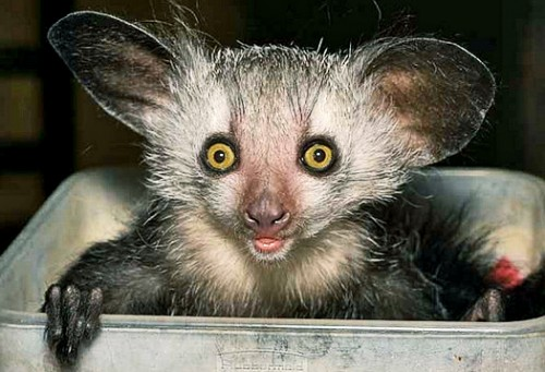 The slower you go the bigger your world gets • aye-aye
