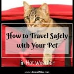 How to Travel Safely with Your Pet in Hot Weather