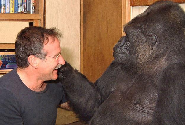 Koko the Gorilla Mourns Robin Williams Death