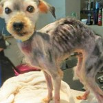 Dog Needs HELP, Hendrick Boards Has a Mission to Save Him