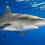 7 Deadliest Animals in Australia, Travelers Beware!
