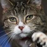 CarPET Scratch Stopper Review, Save Carpet, No Declaw!